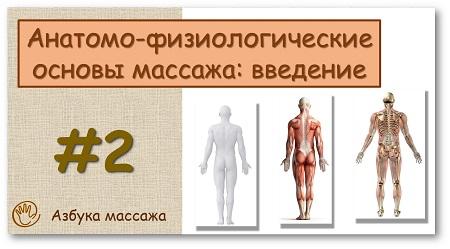Анатомо-физиологические основы массажа: введение