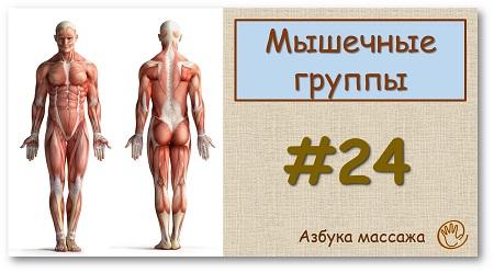 Мышечные группы: принципы расположения и связь с движением