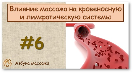 Влияние массажа на кровеносную и лимфатическую системы